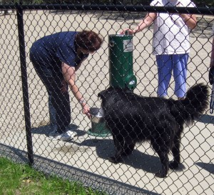 Falmouth's Dog Park