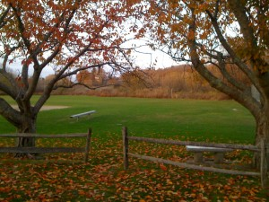 fall foliage at the park in Woods Hole