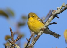 Cape Cod birding is best in Falmouth