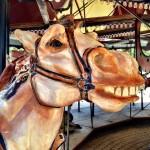 Carousel of Light Falmouth MA